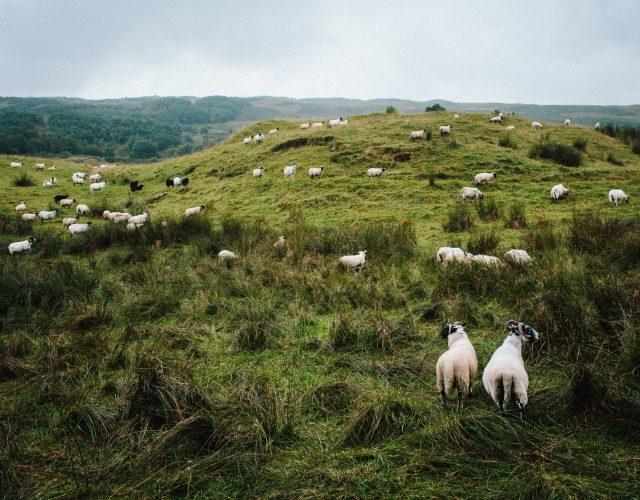 West Highland Way – Tag 4